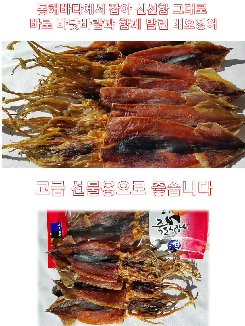 배오징어10-02.png