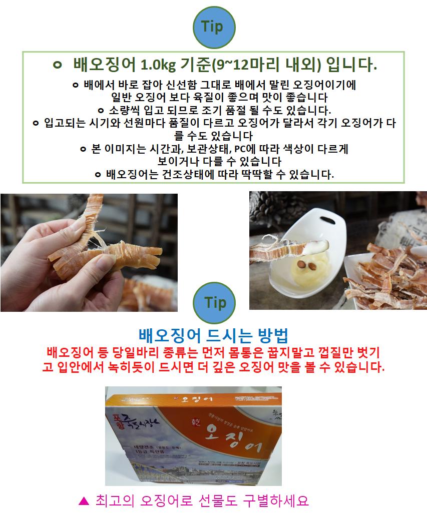 배오징어(1kg)상급 9~12마리.png