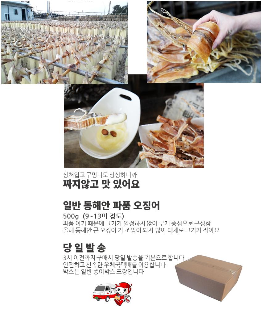 일반 동해안 파품 오징어 500g(9~13마리).png