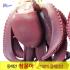 문어 2kg (생물문어) 참문어 포항 죽도시장