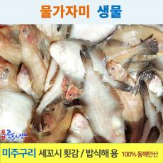 포항 죽도시장 물가자미 2kg (생물) 미주구리 가자미 새꼬시 횟감 밥식해 용