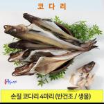 코다리 (반건조, 생물) 냉동 4마리 작은명태포항 죽도시장